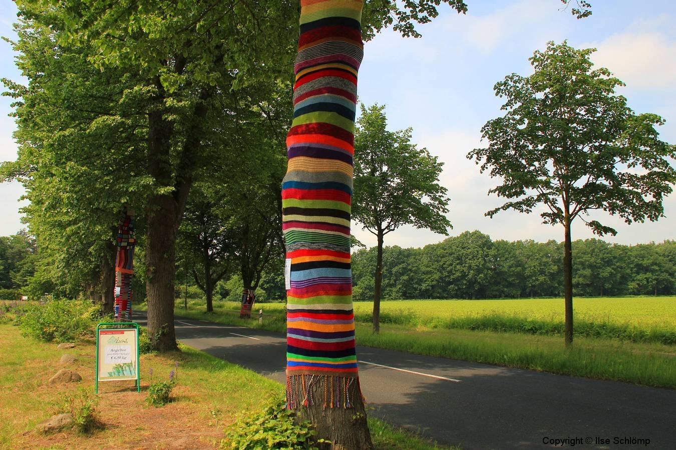 Cuxland, Loxstedt 2012, Dünenfährstraße