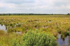 Cuxland, Wanna-Ahlen-Falkenberg 2017, Ahlenmoor