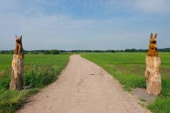 Cuxland, Loxstedt 2021, Moorgebiet bei Hetthorn, Wo sich Fuchs und Hase gute Nacht sagen