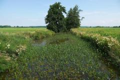Cuxland, Loxstedt 2021, Moorgebiet bei Hetthorn, Gackau