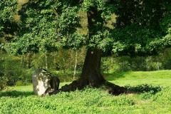 Cuxland, Loxstedt-Hetthorn 2021, Torfdamm