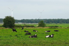 Cuxland, Beverstedt-Hollen 2021