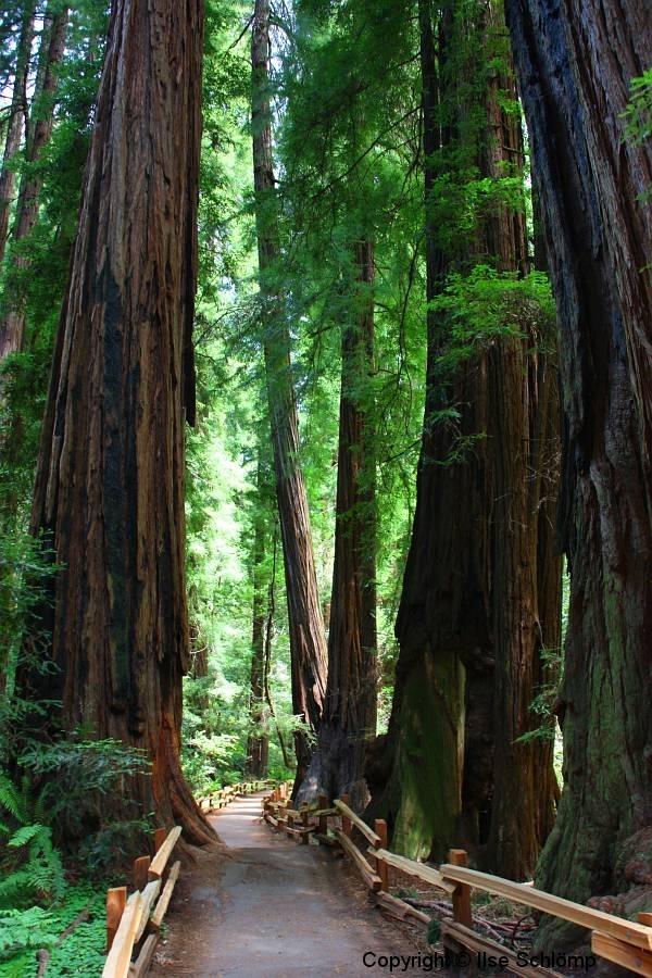 USA, Kalifornien, Muir Woods
