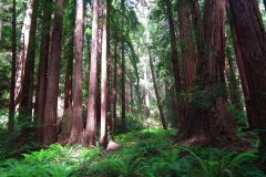 USA, Kalifornien, Muir Woods