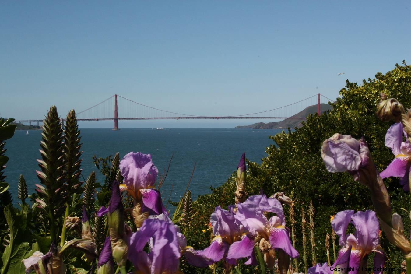 San Francisco, Schwertlilien, Blick von Alcatraz auf die Golden Gate Bridge