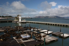 San Francisco, Fisherman's Wharf, Seelöwen