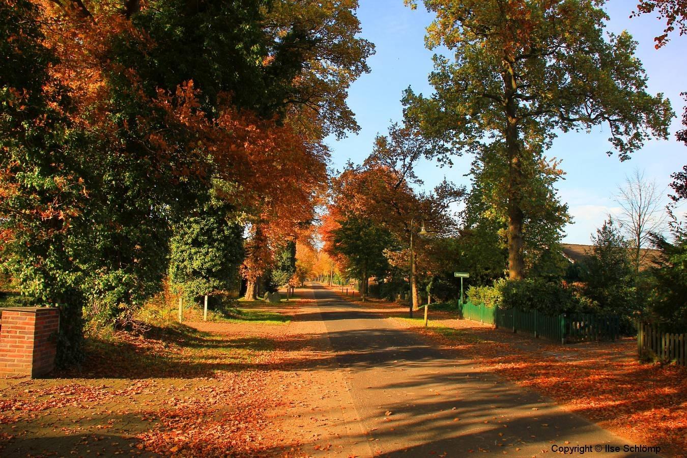 Cuxland, Stinstedt, Herbstfärbung in der Ringstraße, Herbst 2011