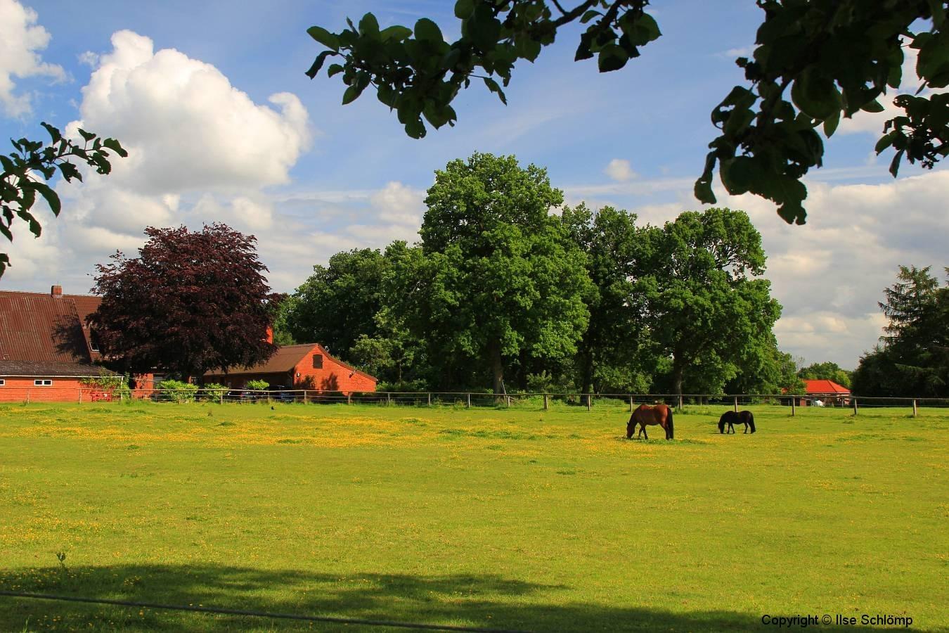 Cuxland, Stinstedt, Blick vom Historischen Weg, Sommer 2012