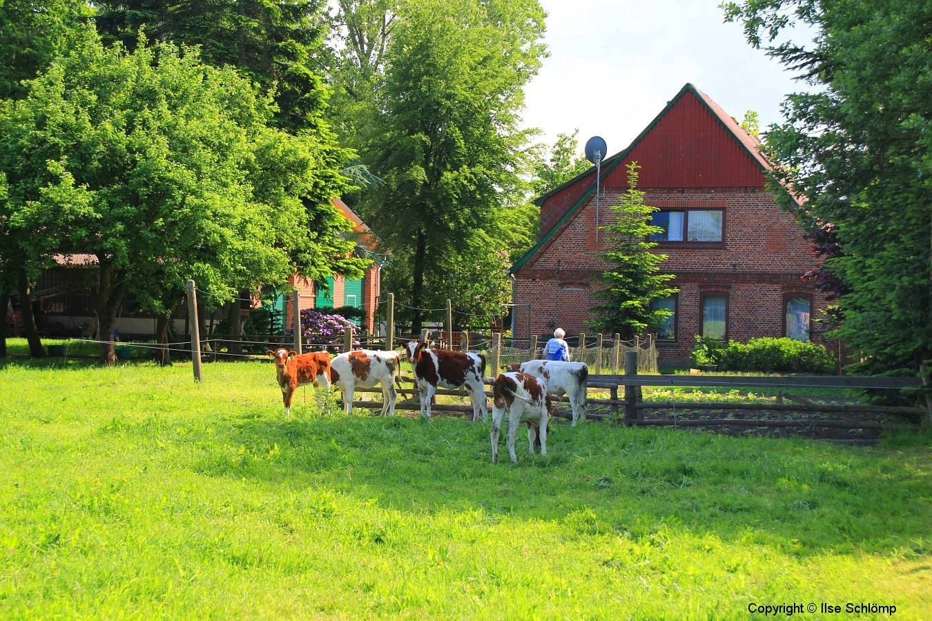 Cuxland, Stinstedt, Kälber Am Scheunenplatz, Sommer 2012