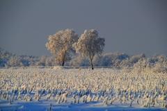 Cuxland, Stinstedt, Lütje Wisch, Blick über ein abgeerntetes Maisfeld, Winter 2010