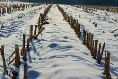 Cuxland, Stinstedt, Abgeerntetes Maisfeld, Winter 2013