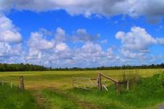 Cuxland, Stinstedt, Im Moor, Frühling 2004