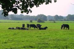 Cuxland, Stinstedt, Lütje Wisch, Sommer 2004