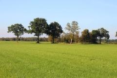 Cuxland, Stinstedt, Loxstedter Moor, Herbst 2016