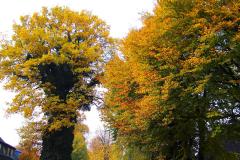 Cuxland, Stinstedt, Ringstraße, Herbst 2018