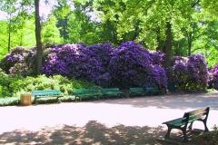 Bremen, Rhododendronpark