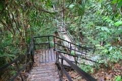 Malaysia, Taman Negara-Regenwald