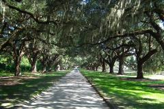 USA, South Carolina, Boone Hall Plantage, Steineichenallee