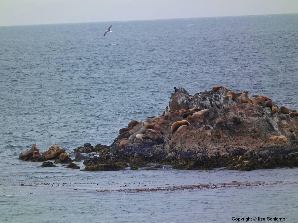 USA, Kalifornien, Monterey, Seelöwen