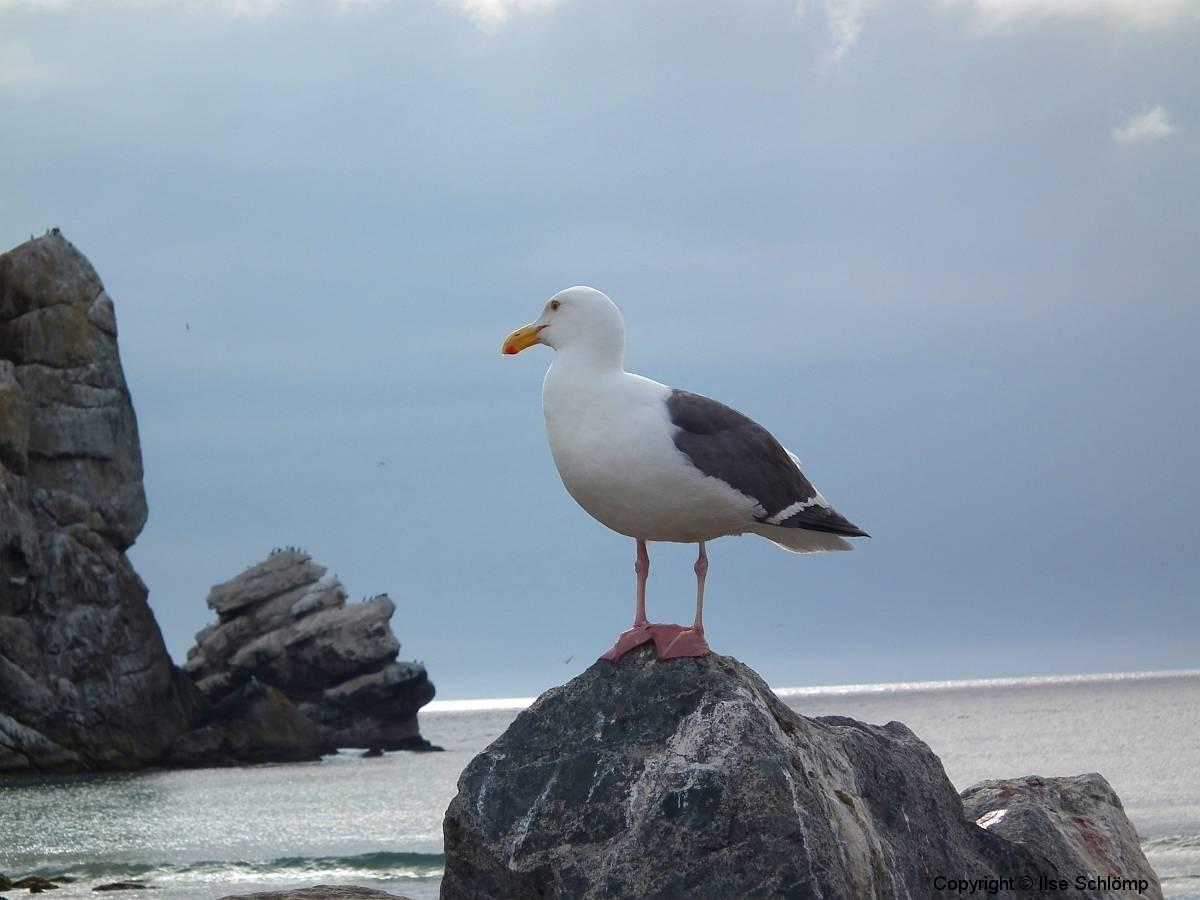 USA, Kalifornien, Morro Bay