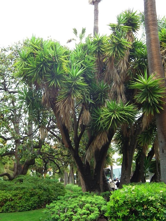 USA, Kalifornien, Santa Barbara