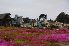 USA, Kalifornien, Monterey