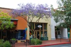 USA, Kalifornien, Santa Barbara, Jacarandabaum