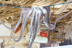 Ägypten, Sinai-Halbinsel 2009, Tintenfisch