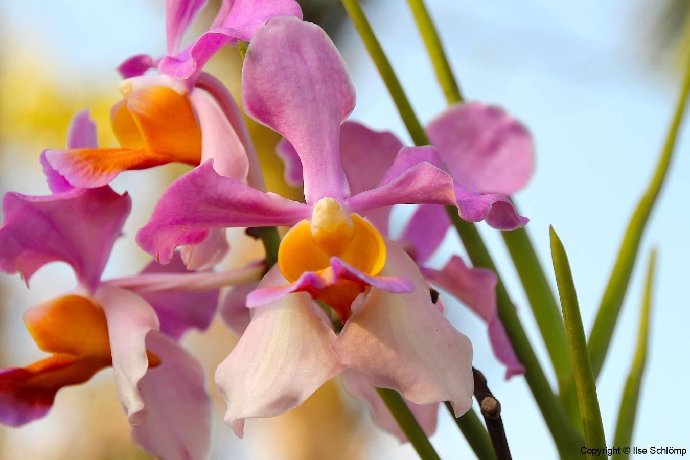 Bali, Denpasar, Orchideen Garten