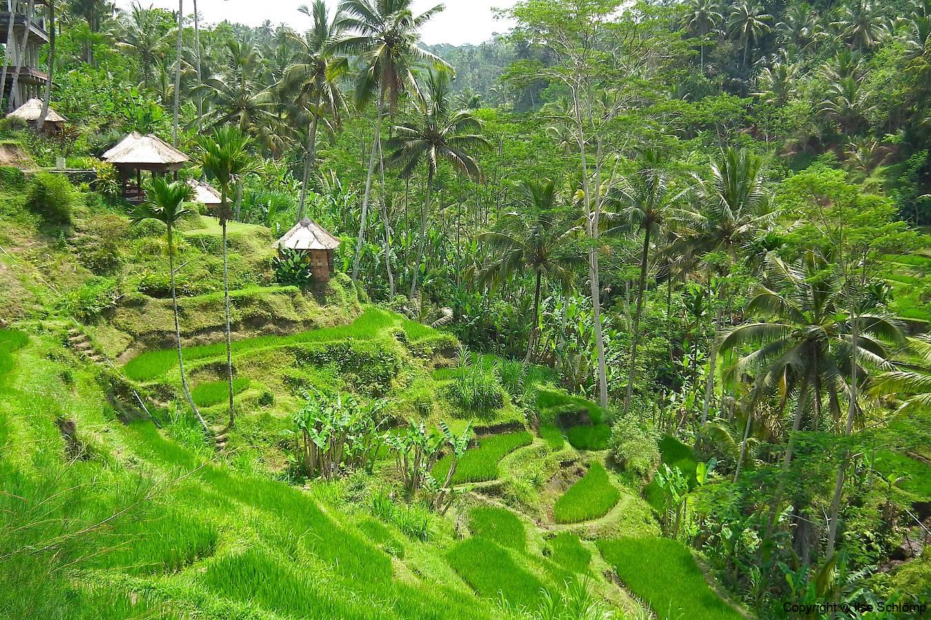 Bali, Tegalalang Reisterrassen