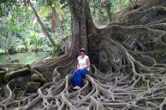 Bali, Goa Gajah Tempel, Ficus
