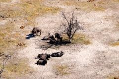 Botswana, Okavango Delta, Streifengnus