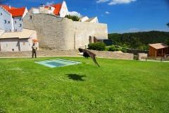 Schloss Rosenburg, Riedenburg, Bayern, Greifvogel-Flugschau