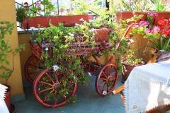 Istanbul, Hoteldachterrasse, Blumenwagen
