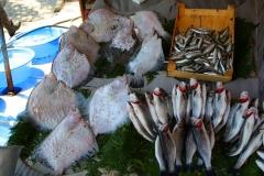 Istanbul, Fischauslage