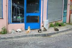 Istanbul, Katzen in der Altstadt