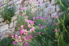 Istanbul, Blumen an der Theodosianischen Landmauer