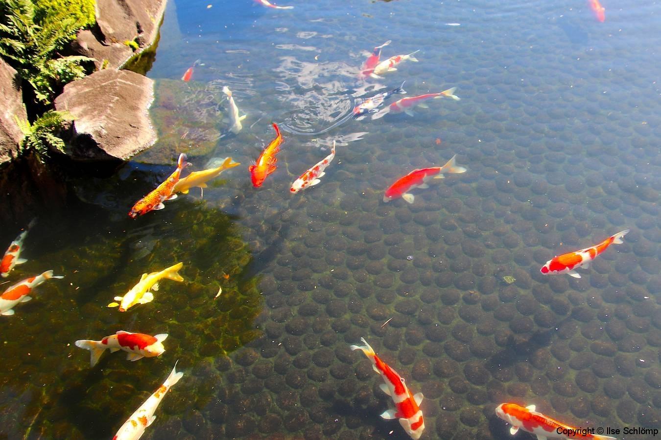 Japan, Himeji, Koko-en-Garten, Koi