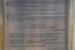 Japan, Hiroshima, Friedenspark, Gedenktafel vor den Phönixbäumen
