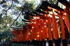 Japan, Kyoto, Fushimi Inari Schrein, Torii-Gang