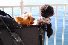 Japan, Mit der Fähre nach Miyajima, Schoßhunde im Hundebuggy