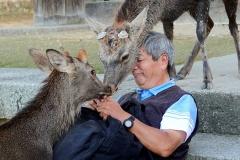 Japan, Nara, Nara-Park, Sikahirsche