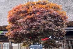 Japan, UNESCO Welterbedorf Shirakawago, Yukitsuri (Hochbinde)