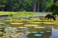 Java, Bogor, Botanischer Garten, Riesenseerosen