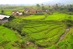 Java, Reisfelder