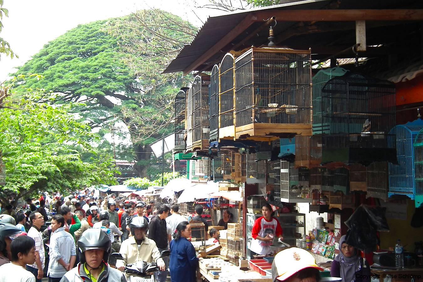 Java, Malang, Birds and Flower Market