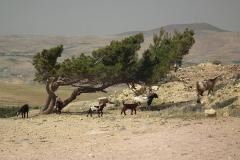 Jordanien, Idumäa