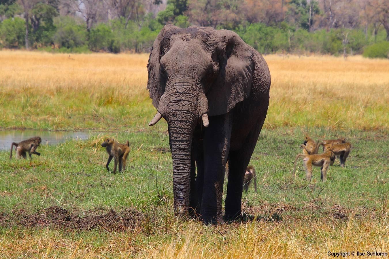 Botswana, Moremi Nationalpark