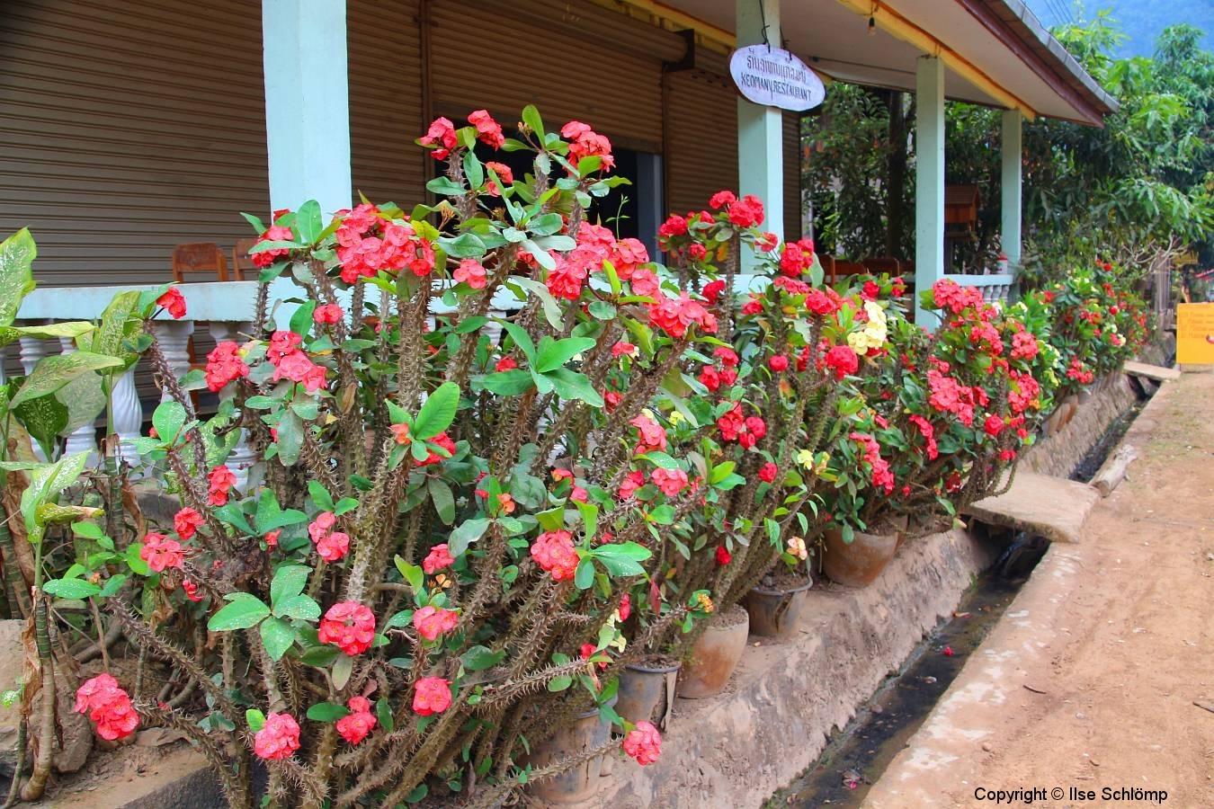 Laos, Muang Ngoi Neua, Christusdorn