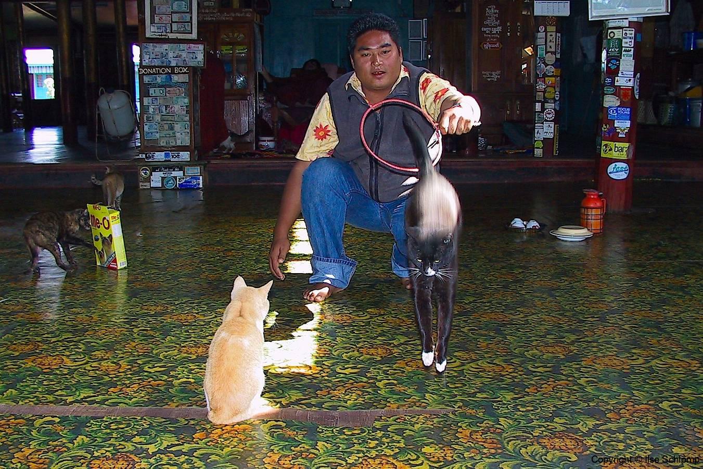Myanmar, Inle-See, Nga Phe Kyaung Kloster, Katzendressur